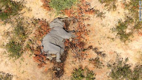 """Afbeeldingen verkregen door CNN laten veel van de olifanten zien liggen """"plat op hun gezicht."""""""